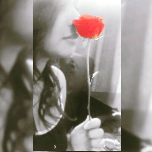Blackandwhite Vida Rojo Petalos Belleza