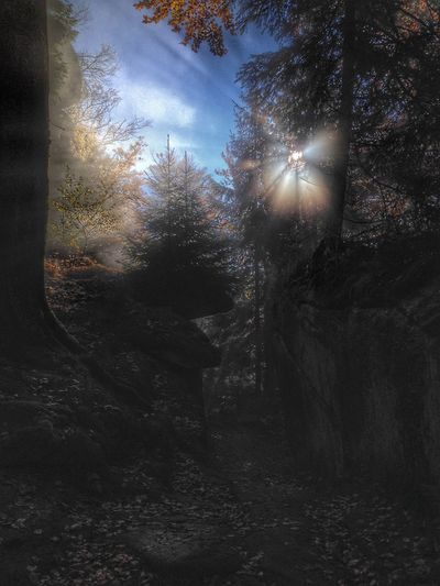 Morning Mood Forest Natural Beauty Nature Photography Nature Lover Shotoftheday Tree Stone Natural Photography Fichtelgebirge