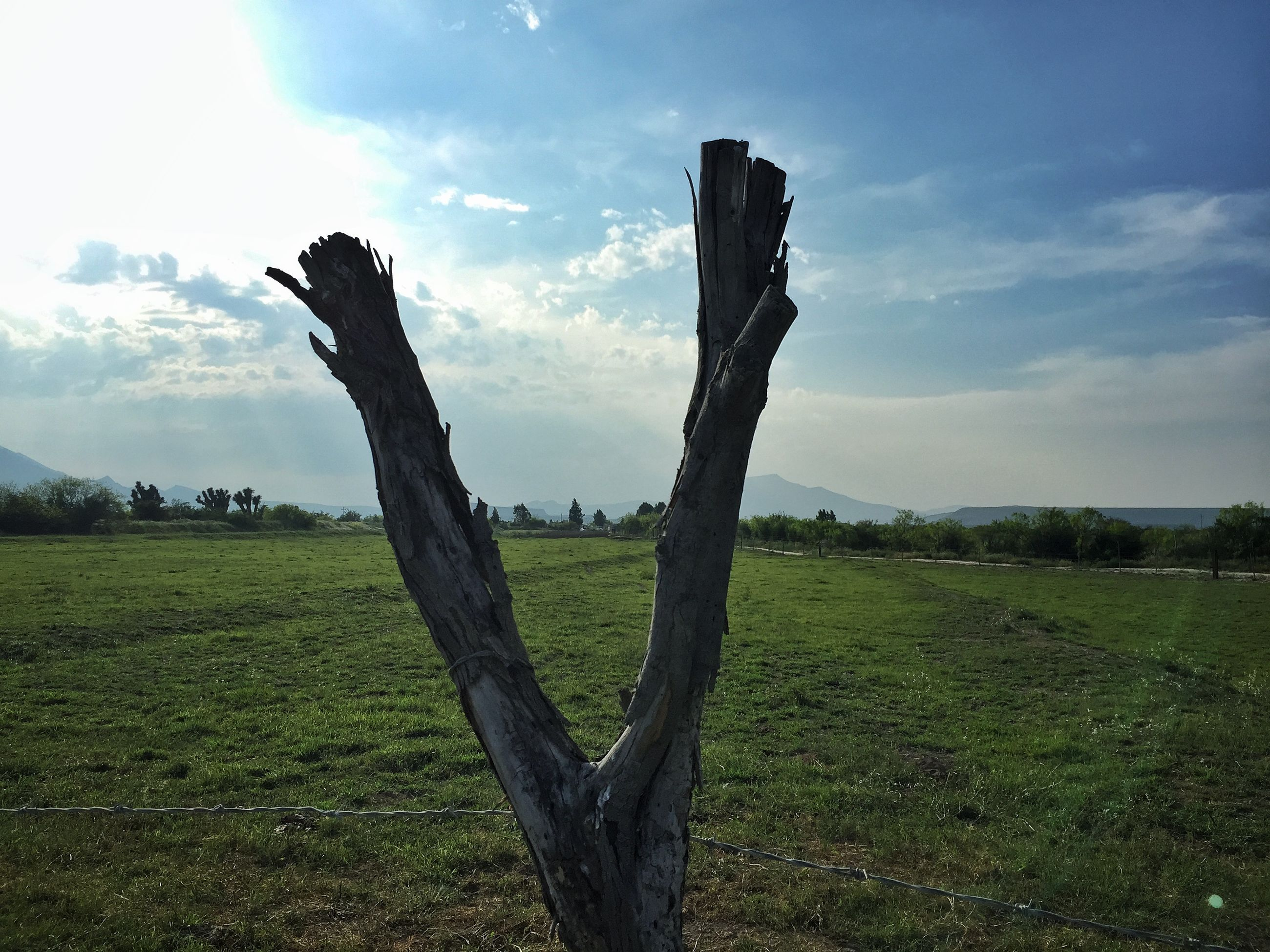 grass, sky, field, tranquility, landscape, tranquil scene, cloud - sky, nature, grassy, growth, scenics, beauty in nature, cloud, green color, tree, cloudy, tree trunk, day, rural scene, non-urban scene