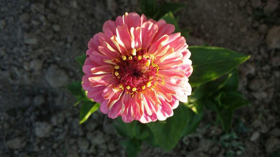 Lg G2.No filter. Flower Nature Sunshine