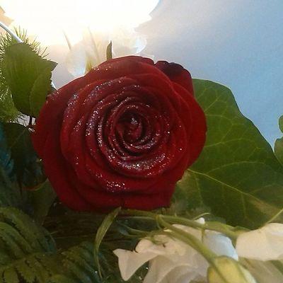 Red Rosé Wedding Flower nofilter particular instawedding instaflower instaphoto photo instaday instalike likeme likeforlike like4like follow followforfollow followme follow4follow