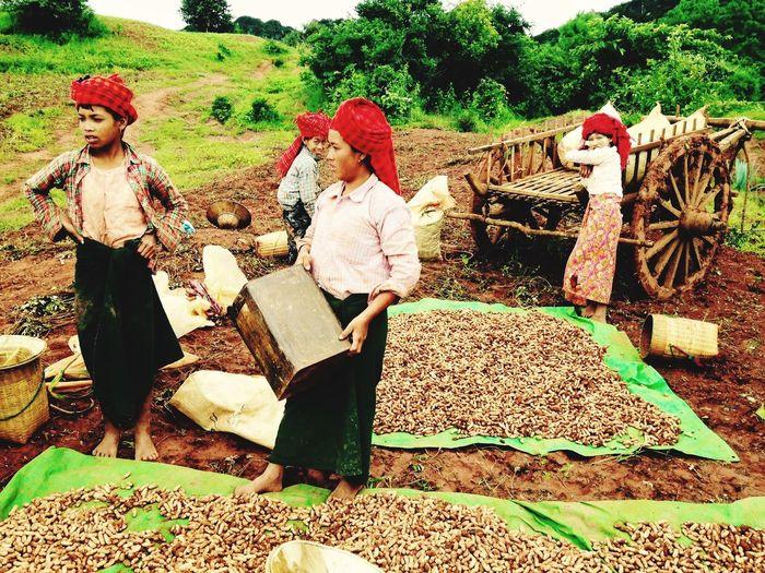 Burma People Myanmar Hilltribe Trekking Burma EyeEmNewHere Real People Day Working Nature Sitting People Women