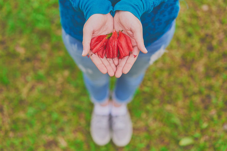 Low Section Of Woman Holding Red Flowers While Standing On Field