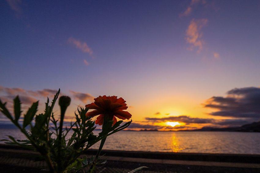 June 2016 Sunset Sunset Silhouettes Frower Railwaystation Silhouette Seaside Seascape Nagasaki Nagasaki JAPAN