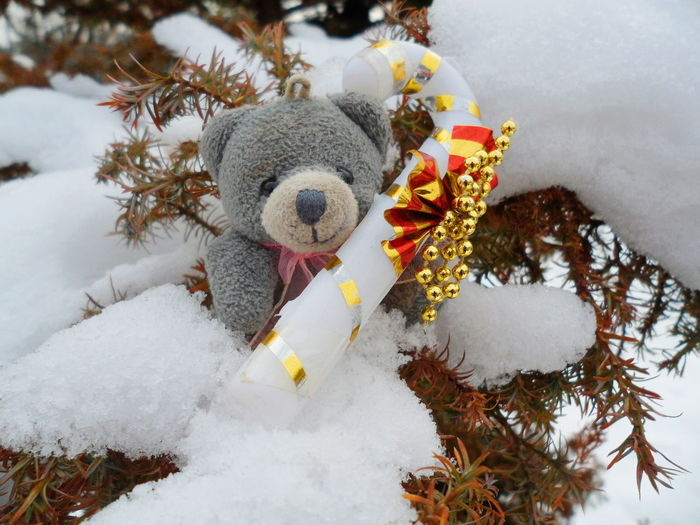 Christmas toy bear on snow background A New Perspective on Life Christmastime Christmas Decorations Christmas Snow Toy Toy Bear Tree Water Close-up Sky Blooming Snowman Branch Bare Tree Woods Flower Tree