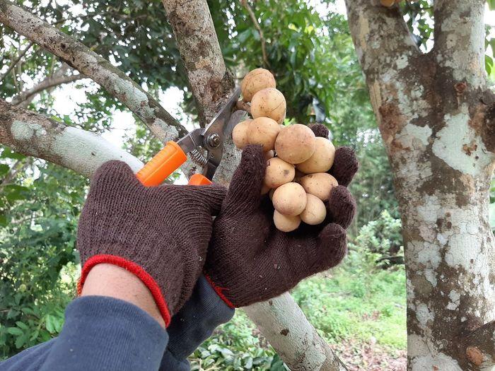 Glove Garden