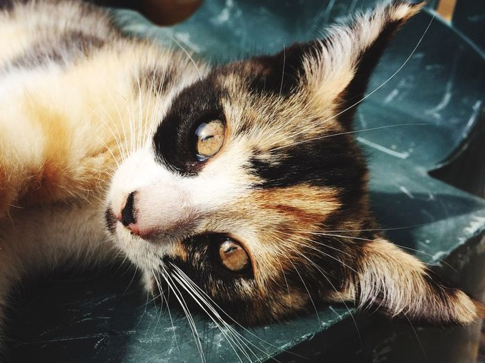 Kot , Kitty , Pets Domestic Animals Animal Themes One Animal Domestic Cat Mammal Feline Whisker Close-up Indoors  No People High Angle View Portrait Looking At Camera Day EyeEmNewHere Love Is Love EyeEmNewHere