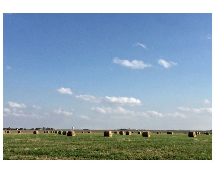 Hay fields, Texas Malephotographerofthemonth This Week On Eyeem EyeEm Best Shots Field Landscape Agriculture Bale  No People Grass Sky Day Nature Tranquility Mammal Scenics Animal Themes Outdoors Rural Scene Beauty In Nature Hay Bale