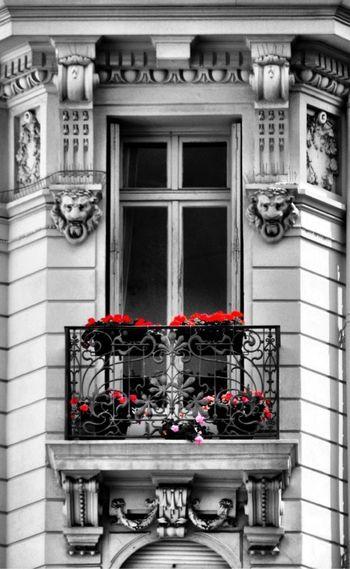 Window flowers building