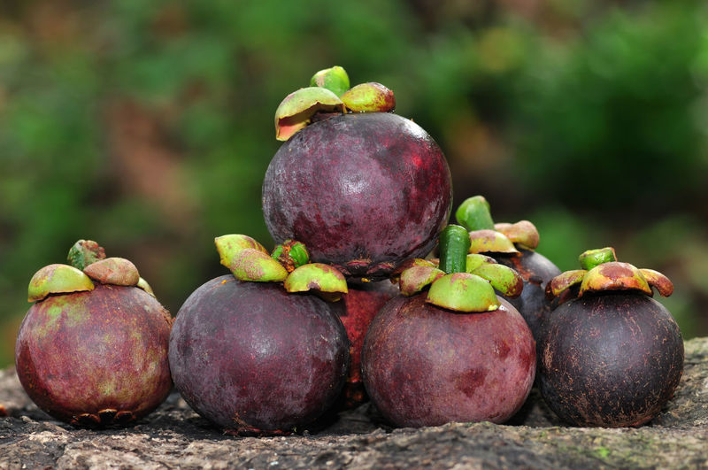 Mangosteen queen of fruits Agriculture Thai Fruit Nature Fruit Close-up Green Color Food And Drink