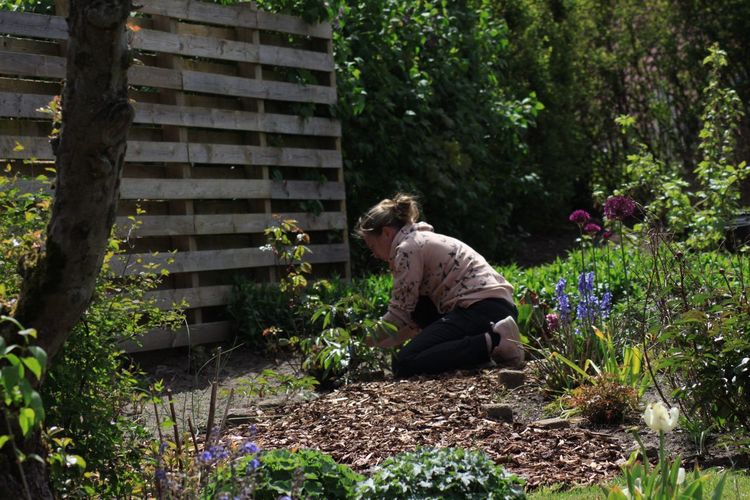 Rear view of woman working in the garden, planting flowers