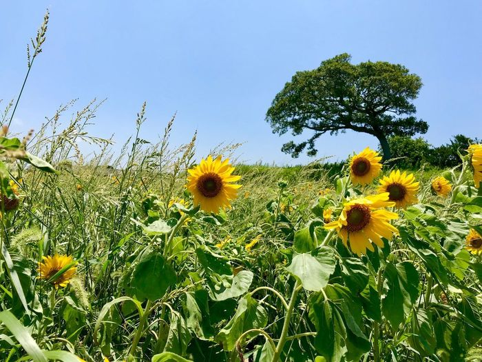Plant Flower Flowering Plant Growth Yellow Sky Beauty In Nature