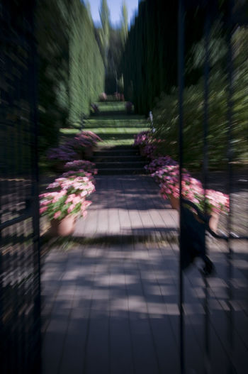 Beauty In Nature Diminishing Perspective Garden Garden Abstra Garden Gate Garden Photography Gardening Gardens Gate Gateway To Garden Motion Blur No People Pink And Green Colors The Way Forward Tranquility Walkway Wrought Iron Gate