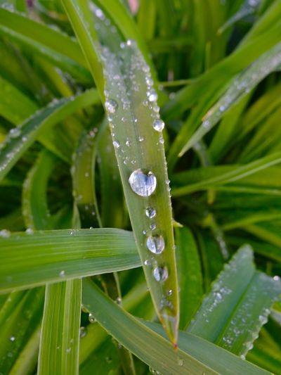 Enjoying Nature Water Droplets Nature_collection EyeEm Nature Lover