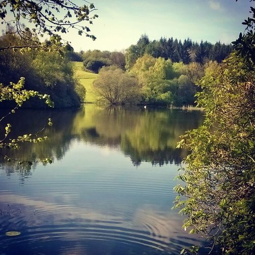 June vibes ✌ June Summer Nature Lake Water Trees green Relaxing Vibes Sun Reflection Blue Sky Clouds Instadaily Instaireland Ireland Monaghan  Rossmore Beautiful Love