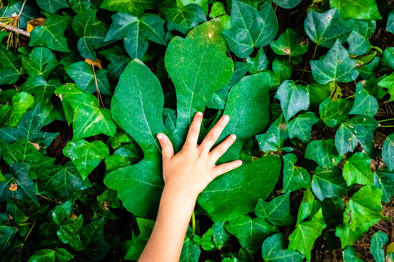 Cropped image of person touching leaves at park