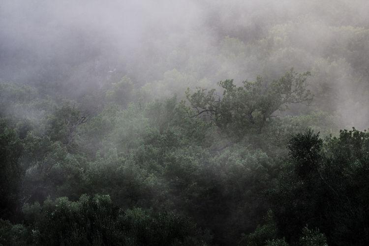 Green Scenics -