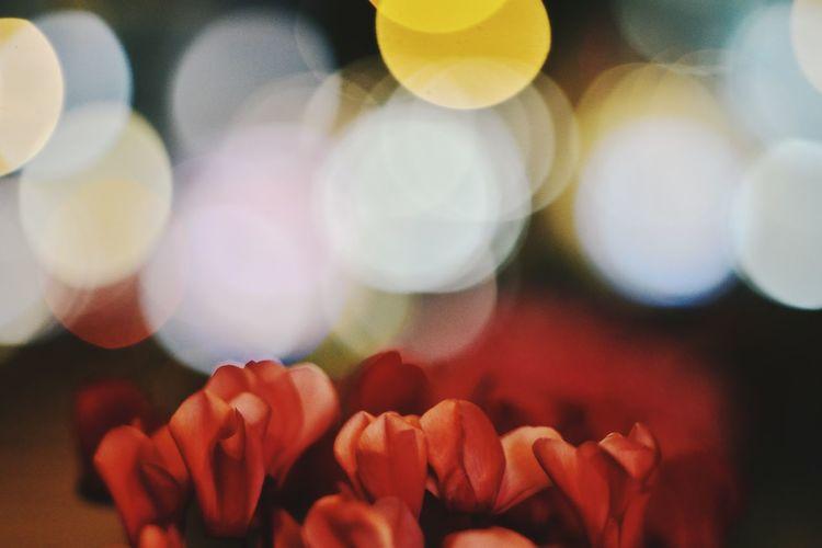 wonderland EyeEm Best Shots EyeEm Nature Lover EyeEm Gallery Eyeem4photography Beauty In Nature Bokeh Bokeh Photography Streetphotography Multi Colored Red Flower Defocused Supermarket Close-up Blooming Flower Head Pollen
