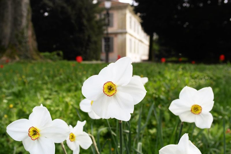 Flower Nature Beauty In Nature Freshness Focus On Foreground No People Winterthur Green