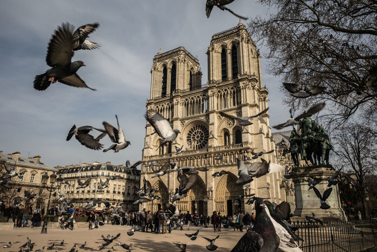 Pigeons flying against notre dame de paris in city