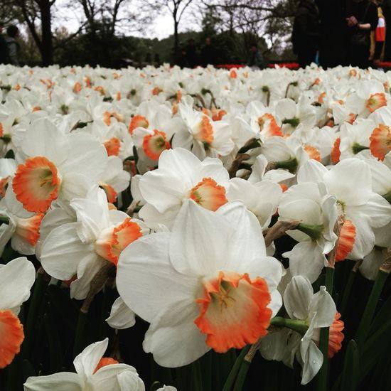 虎丘。至るところに花、至るところに小学生の団体。校外学習の時期? Flower Nature Growth Beauty In Nature Flower Head Outdoors Blossom Plant Petal Sozhou Happy Life Spring 2017 Quality Time Enjoying Life