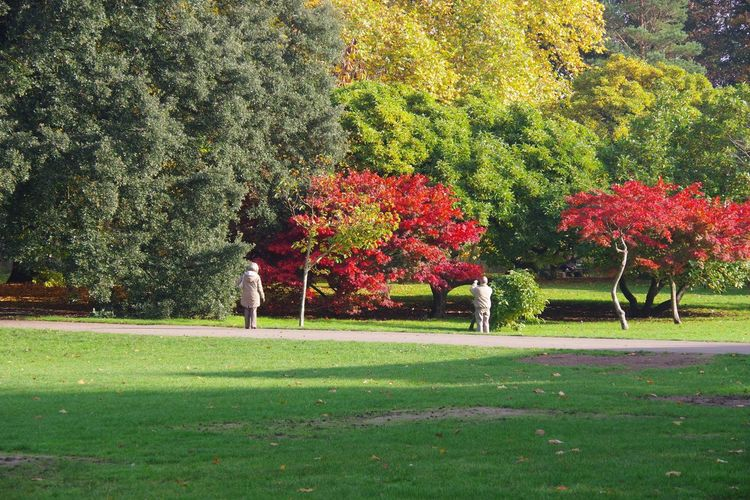 Bute Park Tree Growth Red Grass Nature Garden Flower Beauty In Nature Outdoors Day Photography