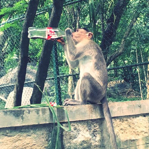 Monkeydrinkingcoke Monkey Business Monkey Drinking Adopted To The City Connected By Travel
