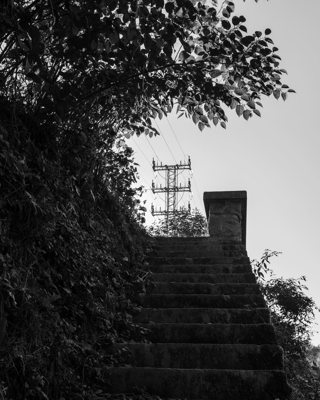 tree, low angle view, steps, growth, steps and staircases, staircase, architecture, built structure, outdoors, day, no people, nature, sky