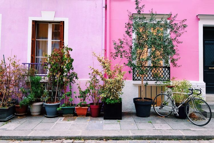 Paris Streets Of Paris Pink Facade Plant Built Structure Building Exterior Architecture Potted Plant Day No People