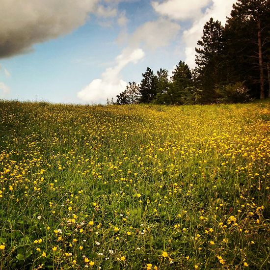My Country In A Photo Flowers Mountains Abruzzo - Italy