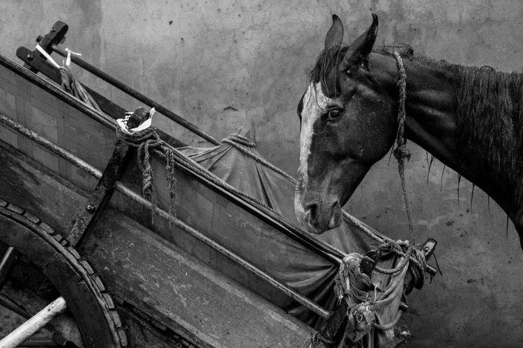 Horse Beside Cart