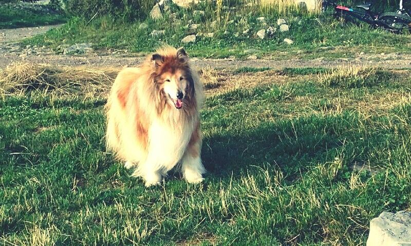 Mydog♡ Beautiful Animal Themes Rip Droopy