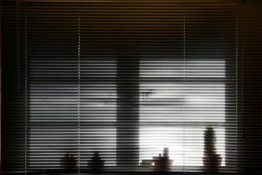 Venetian Blind Morning Sunshine