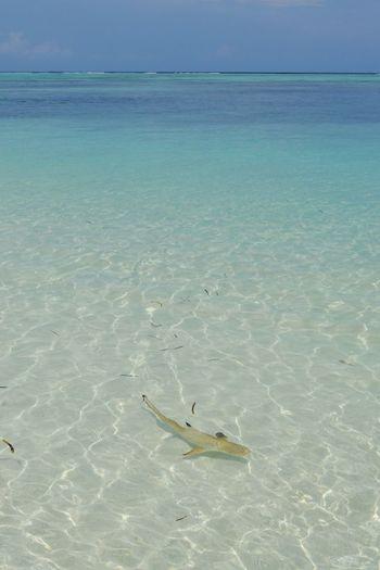 Fish Swimming In Sea Against Sky