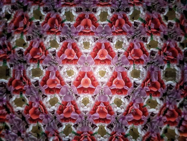 Multi Colored Purple Red Flower Hexagon Kaleidoscope Kaleidoscope Effects Backgrounds Abstract Backgrounds Textured  Pattern Geometric Shape Backgrounds Full Frame Red Close-up Abstract Flower Head Colorful