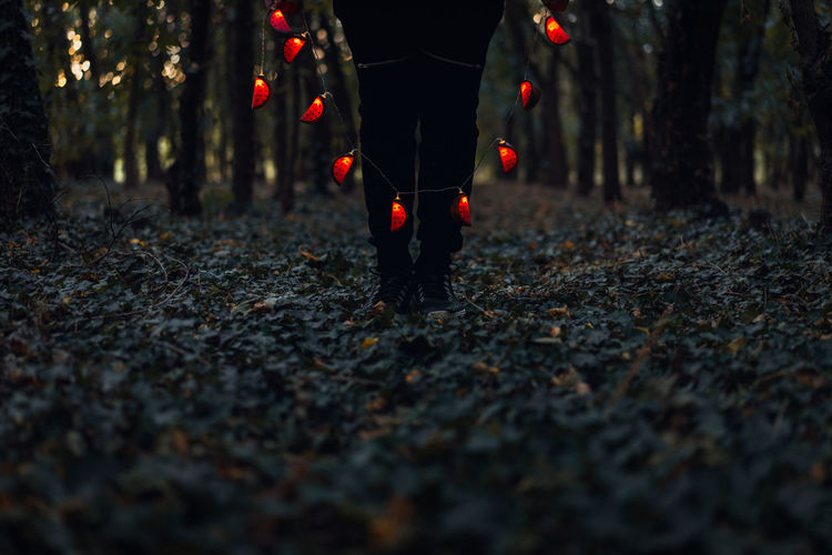 Summer? Autumn? Forest Illuminated Tree One Person People Low Section Standing The Week On EyeEm Lights Lost In The Landscape Rethink Things Sckmjnglblls EyeEm Ready   Love Yourself Creative Space 10 HUAWEI Photo Award: After Dark
