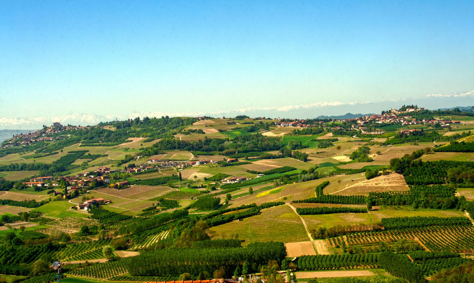 Landscape Tree Environment Plant Nature Scenics - Nature Land Beauty In Nature Sky Day No People Field Outdoors Piedmont Italy Monferrato Roero Italian Countryside Vineyard Village Castle