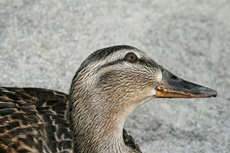 Close-up side view of a bird