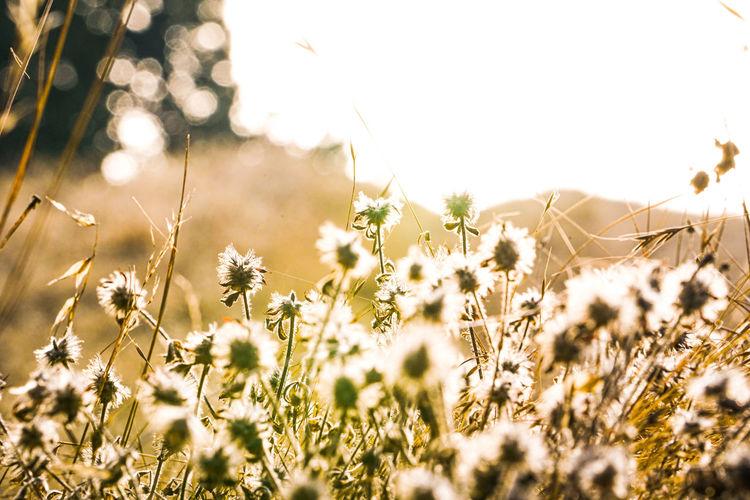 Nature beauty shot in mt. tamalpais