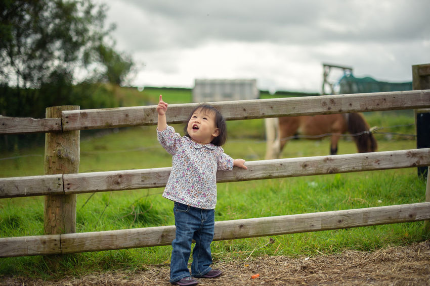 baby girl playing in farm Family Farm Asian Baby Girl Casual Clothing Childhood Day Domestic Animals Fence Full Length Grass Horse Mammal One Person Outdoors People Railing Real People Sky Standing Young Adult