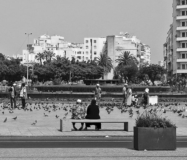 casablanca, Looking the square Casablanca Relaxing Travelgram Streetphotography Ontheroad Bnw_collection Bnw_captures Bnw_worldwide Bnwphotography Bnw_planet Landscape Urbanphotography Travelling + Exploring Artistic Photo Bnw_life Onthestreet Travel Photography Travelphotography Black&white Streetphoto_bw Adapted To The City Miles Away EyeEm Diversity The Street Photographer - 2017 EyeEm Awards Modern Love