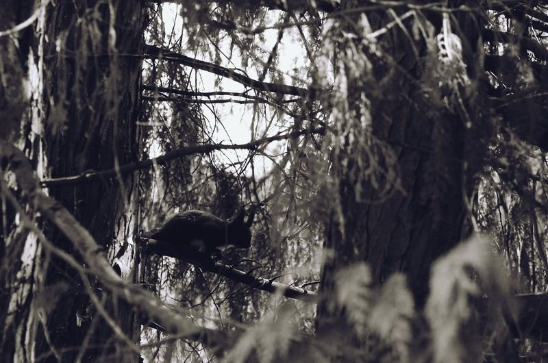 Horse on tree in forest