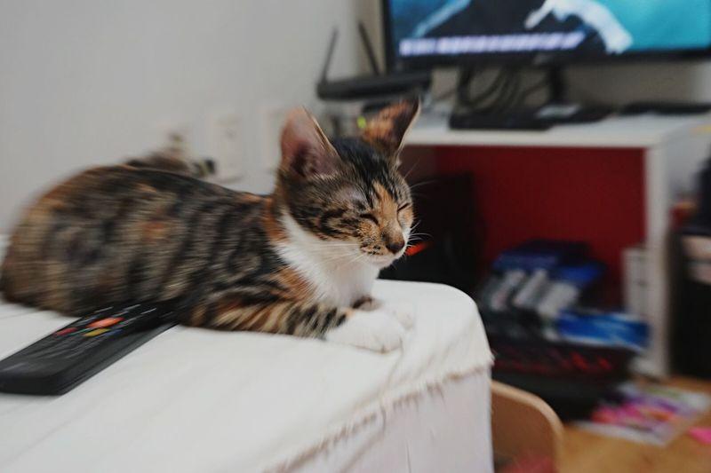 Cat♡ Luv 잠에빠진다