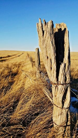 Old twisted fence post Fence Line Trail Into Pasture Sunlight Shadow Focus On Foreground Blurred Background Rural Scene Gold Color In The Distance Wooden Posts Clear Sky Landscape