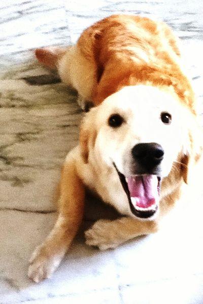 Ilovemydog Dog❤ Lookbutwithmyeyes Pinkmesh