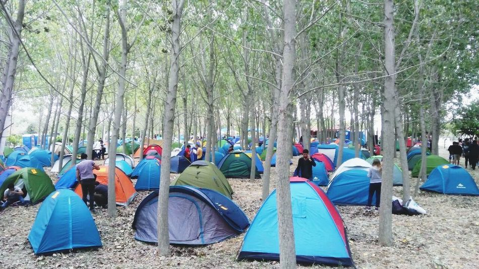İ zmir gençlik festivali Tree Day Large Group Of People Outdoors Nature Shelter Men Beach Real People People First Eyeem Photo