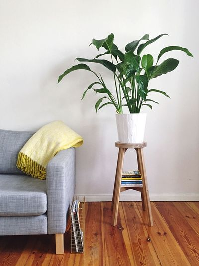 Cropped sofa and pot plant against the wall
