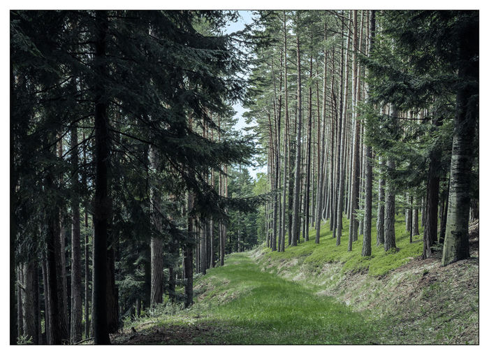 In the woods, Landscape_Collection Lower Austria Spring Nature_collection