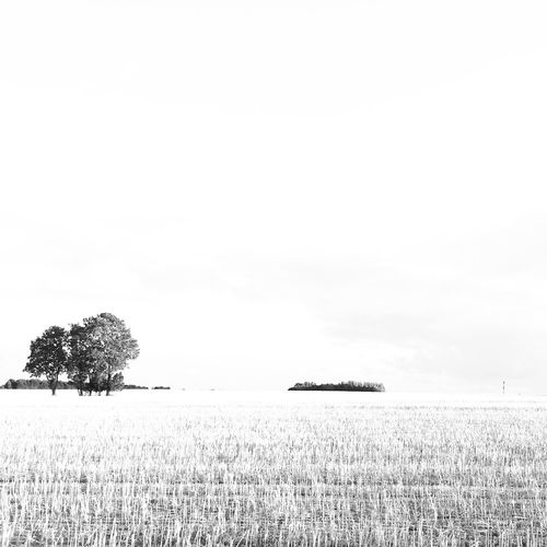 It takes two. Trees outside JersiLL. Larsen's LoungeeTreesoDenmarkees Denmark Check This Out Hello World