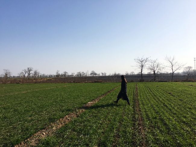 Field Agriculture Clear Sky Growth Nature Green Color Day
